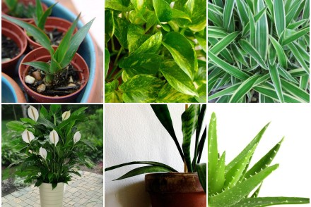 10 plantas para purificar o ar da casa